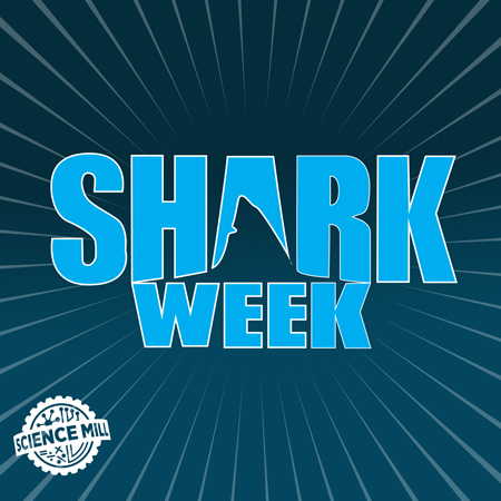 Shark Week at the Science Mill